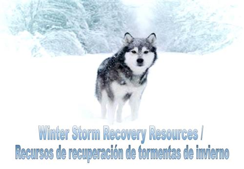 Winter Storm Recovery Resources